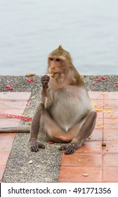 Monkey disabilities have one arm - Shutterstock ID 491771356