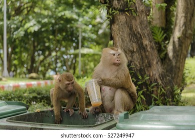 monkey drinking ,Select Focus and Blur