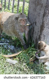 monkey drinking some water