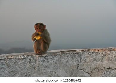 Monkey eating banana at Hampi India