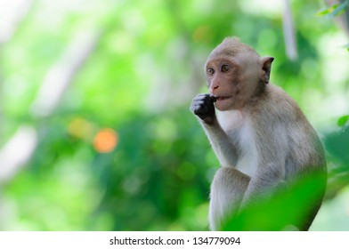 Monkey eating a banana on the tree