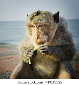 Monkey eating bean