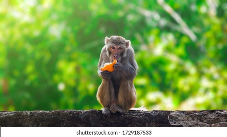 Monkey Eating Hd Stock Images Shutterstock