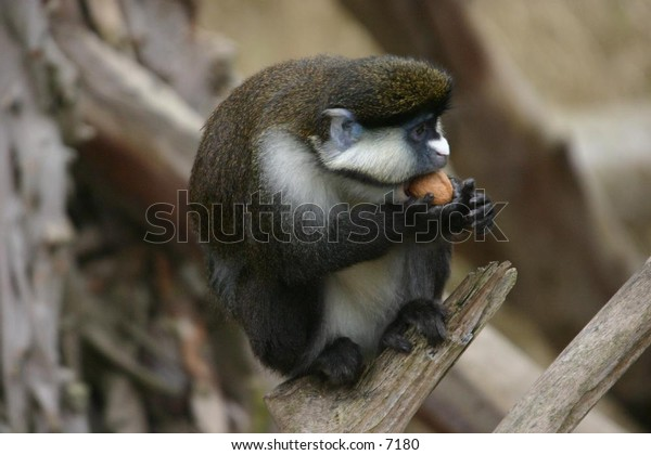 monkey enjoying the day
