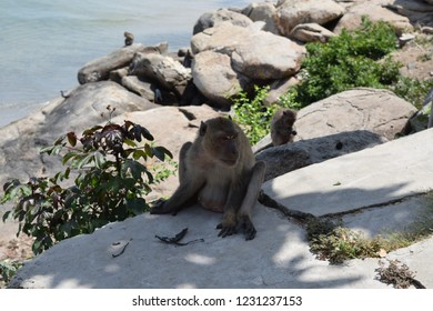 The monkey escaped the hot sun in the shade, sitting on the rocks.
