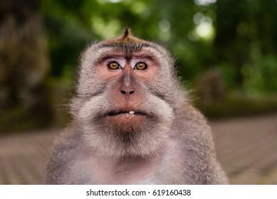 Monkey eye