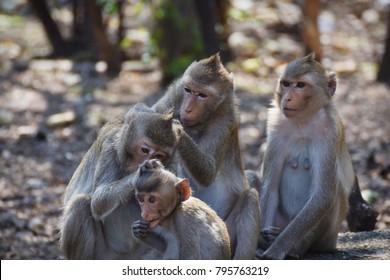 Monkey Family at Khao Hin Snake, Ratchaburi, Thailand.