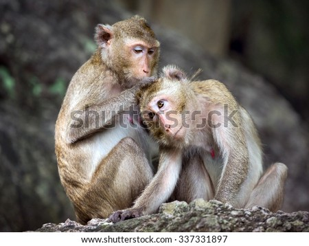monkey family in thailand.