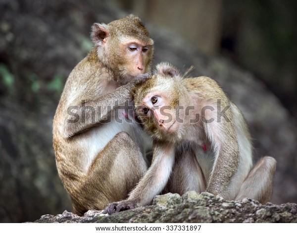monkey family in thailand.