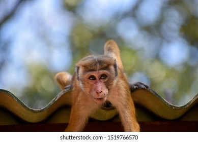 Monkey fooling around a playing close up