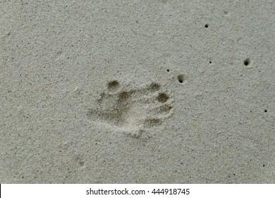 Monkey footprint