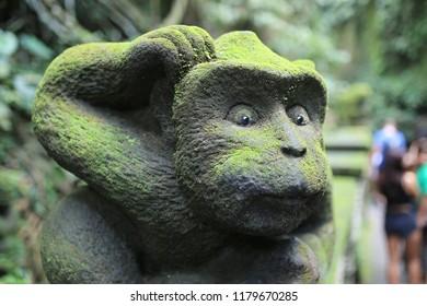 monkey forest Bali, baby monkey, monkey ubud