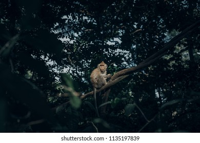 Monkey in forest of Bali, Indonesia