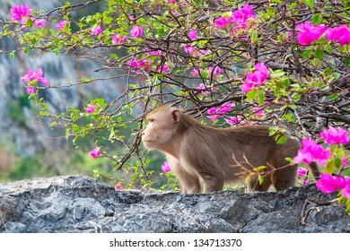Monkey forest with flowers.