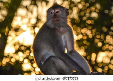 Monkey forest at sunset
