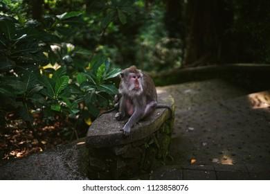 Monkey Forest. Ubud. Bali