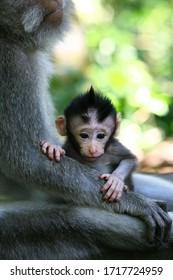 Monkey Forest, Ubud, Bali, Color
