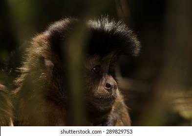 Monkey framed by trees
