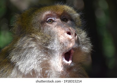 monkey with funny facial expression