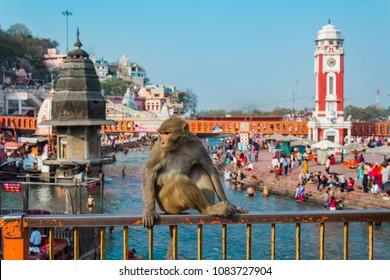 Monkey at Ganges River in Haridwar