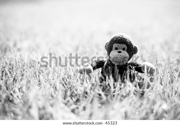 Monkey in the grass. Taken to finish off a roll, actually turned out to be the best of the roll...what does that say?