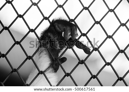 Monkey Hand Grab Cage Concept Help Stock Photo Edit Now 500617561