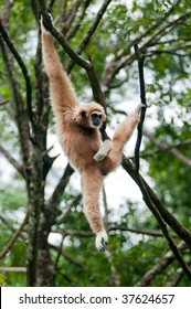 Monkey hanging on a tree branch