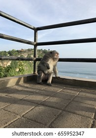 Monkey Hanging Out - Bali, Indonesia