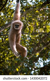 A monkey hanging in a tree