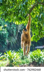 Monkey hanging in the tree