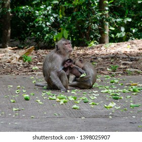 monkey and her children waiting fpr food from human