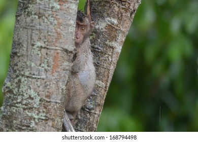 a monkey hiding behind a tree