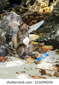 Monkey holding a balloon on a polluted beach in Thailand. Please take nothing but photo's, leave nothing but footprints