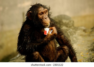 Monkey holding an ice - cream cup .