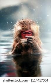 Monkey in hot spring