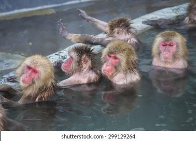 Monkey in Hot Spring, Hokkaido, Japan