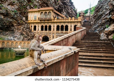 A monkey inside Galtaji Hindu Temple or Monkey Temple near the city of Jaipur in Rajasthan, India.