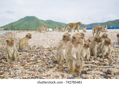 The monkey island. A pack of monkeys stood and looking in the same direction.