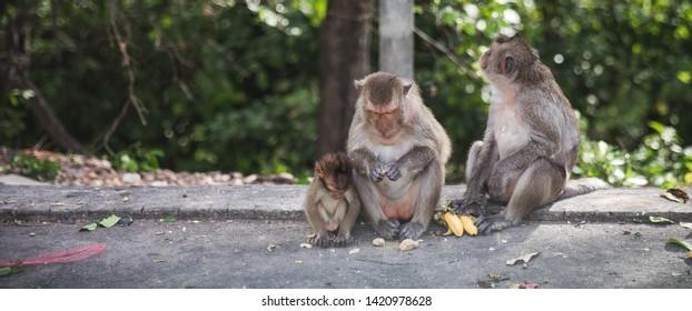 Monkey at Khao Sammuk  Chon Buri in Thailand