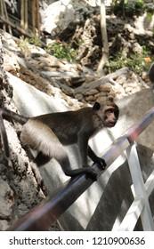 Monkey look back when walkin on wooden stairs holder