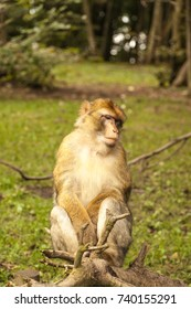 Monkey looking around
