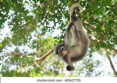 A monkey looking for something away.