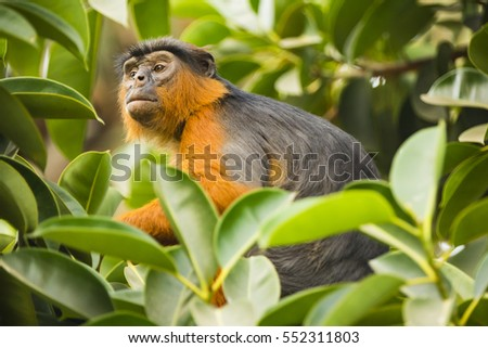 monkey looking through leaves