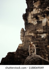 monkey in ,Lopburi, Thailand.