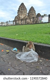 Monkey at Lopburi, Thailand eatting plastic bag.environmental problems,Garbage problem and plastic bag.Reduce plastic waste.Pollution and Environment,Global warming.