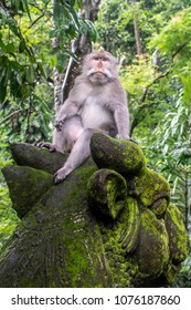 A monkey lounges on top of a mossy statue in a funny position