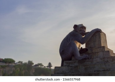 Monkey Macaca fascicularis sitting at sunset with uluwatu temple in the background, Bali island landscape. Famous Indonesia landmark at dusk