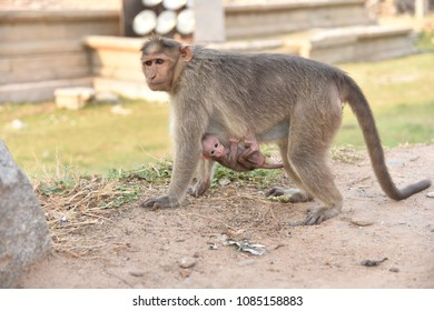 Monkey | Mom and Child | Mothers Day