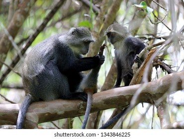 monkey mother look on paw her baby in forest