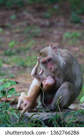 monkey mother playing with her baby,cheeky baby monkey,Crab-eating Macaque,Monkeys in southeast asia,the long-tailed macaque
